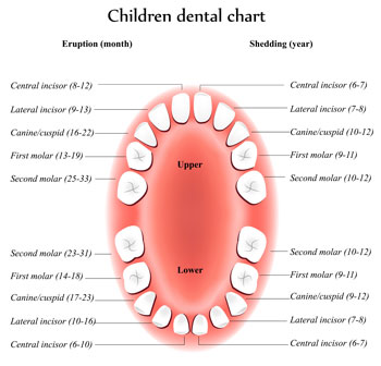 Tooth Eruption Chart - Pediatric Dentist in Ennis and Waxahachie, TX